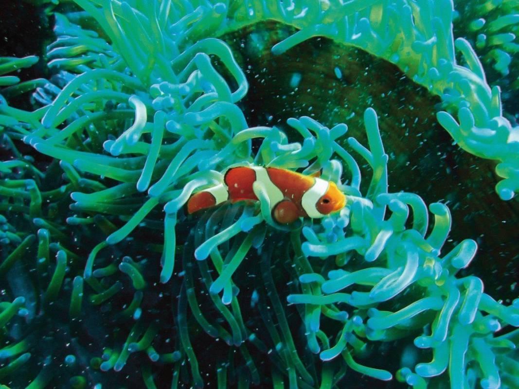 Algas Marinas Biologique Recherche